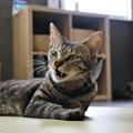 写真: 牙が見えてる猫