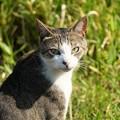 写真: 小顔猫1