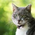 写真: 振り向き猫