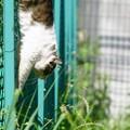 垂直に降りる猫
