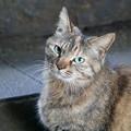 Photos: 上目遣い猫