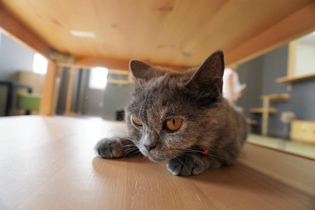 陰から狙う猫