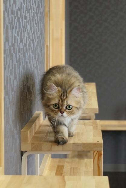 写真: 狙う猫