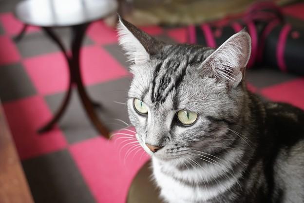写真: 耳を立てる猫