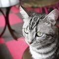 耳を立てる猫