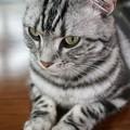 写真: お行儀よく座る猫