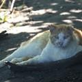 写真: 木陰で休む猫
