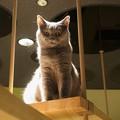写真: 見下ろす猫