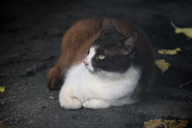 日陰で涼む猫