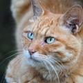 綺麗な目の猫