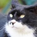 遠くを見る猫1