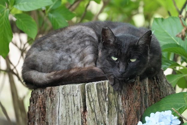 くつろぎながらちょっと警戒する猫
