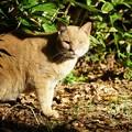 写真: まあるい顔なのにキリっとした猫
