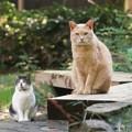 写真: お出迎え猫