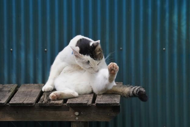 お手入れ猫