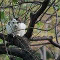 写真: 木の上の猫