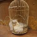 写真: 籠の中の猫