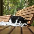 ベンチでくつろぐ猫