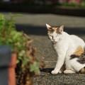 公園の三毛猫