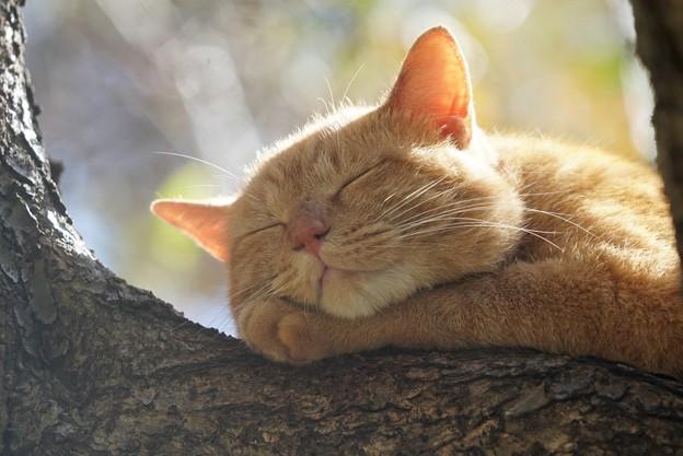 とても幸せそうに眠る猫