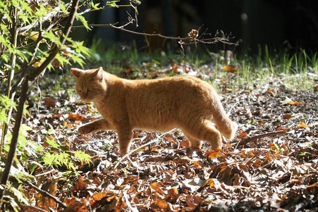 落ち葉の上をお散歩