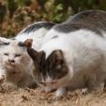 仲良し猫1
