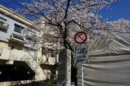 2018年3月28日撮影 西公園 桜 福岡 さくら満開 写真画像 (0)