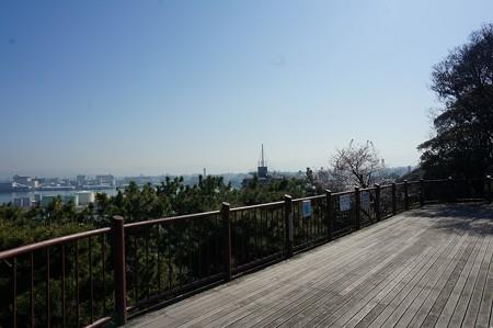 2018年3月28日撮影 西公園 桜 福岡 さくら満開 写真画像 (46)