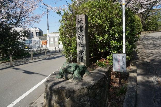 2018年3月28日撮影 西公園 桜 福岡 さくら満開 写真画像 (93)