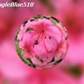 写真: CIMG0227 640×480 50% SpangleBlue510