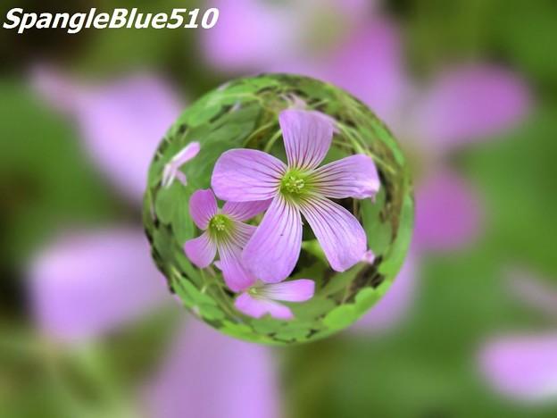 CIMG0263 1024×768 SpangleBlue510