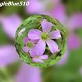 Photos: CIMG0263 1024×768 SpangleBlue510