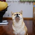 Photos: 見上げるナナ