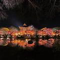 Photos: 東寺の紅葉ライトアップ