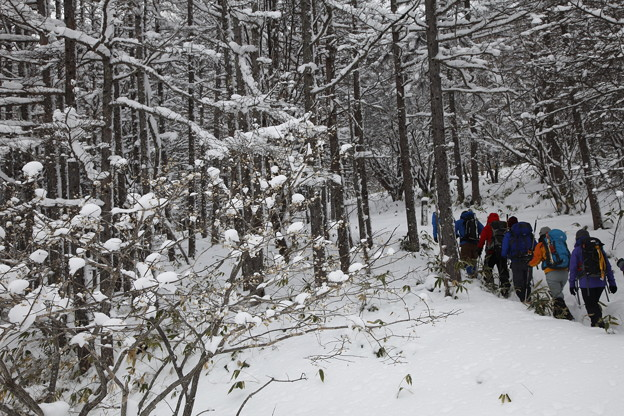 日本の山 雪山講習会S1 蓼科山 歩登山道から歩き出し
