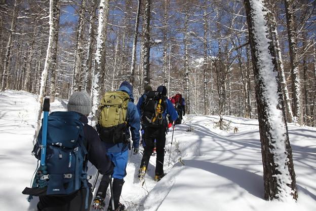 日本の山 雪山講習会S1 蓼科山 快晴の下、登り始めです