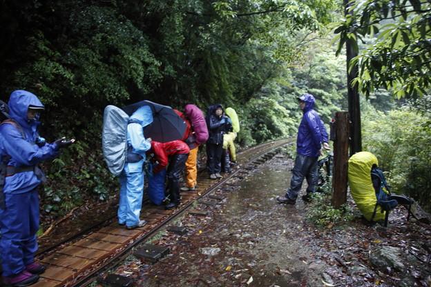 日本の山 ゆっくり登山 宮之浦岳 森林鉄道の軌道歩き