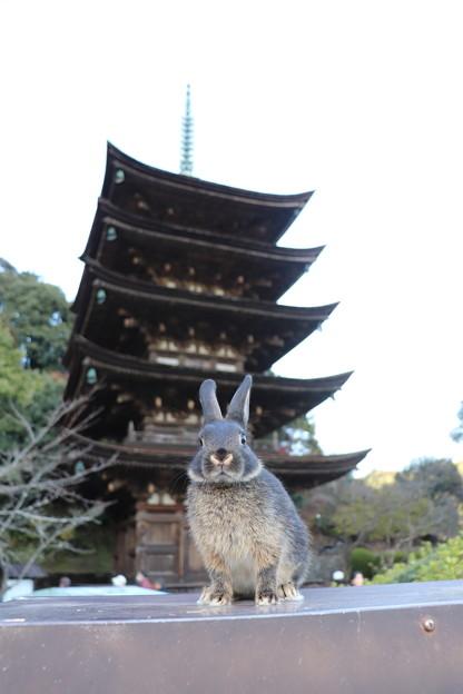 202292-モコちゃん「五重のウサギ?」
