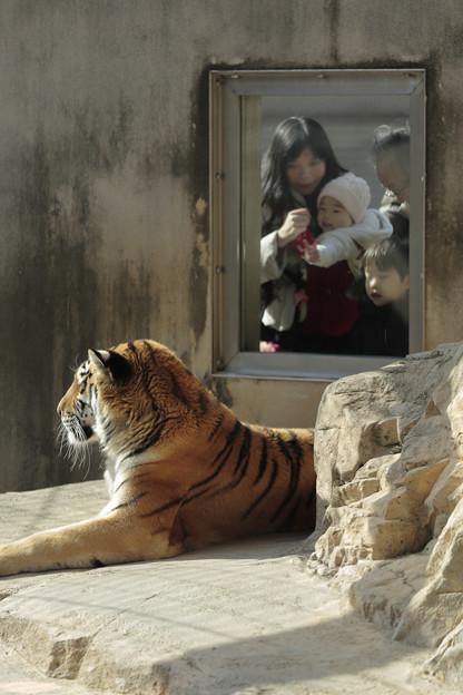 王子動物園31