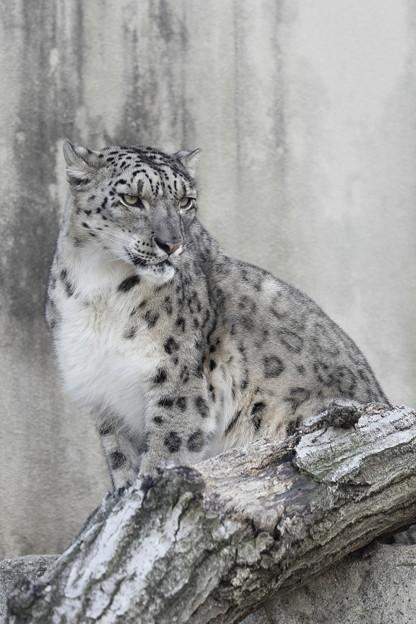王子動物園30