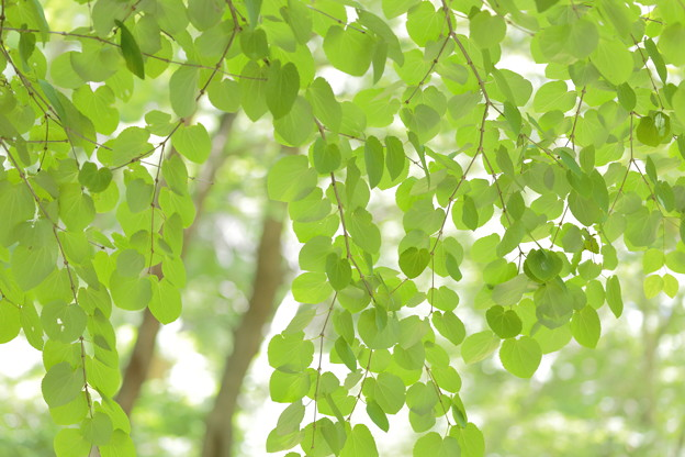大阪市立大学理学部附属植物園11