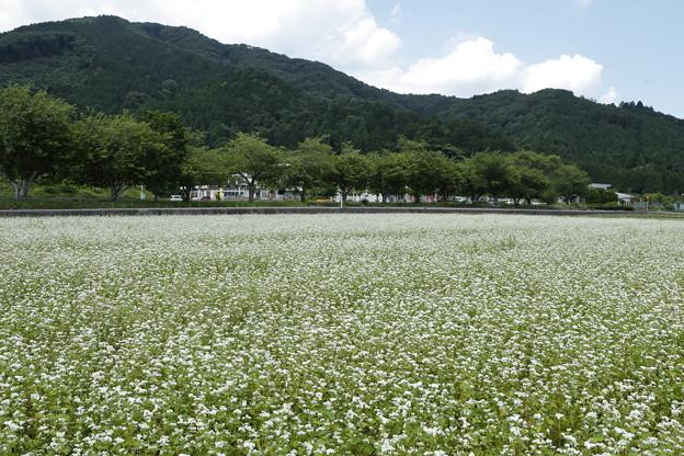 Photos: 関ヶ原・決戦地オフ15