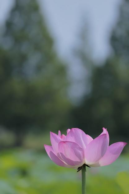 白鷺公園06