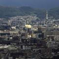 Photos: 嵐山モンキーパーク17