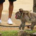 Photos: 嵐山モンキーパーク15