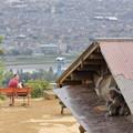 写真: 嵐山モンキーパーク10