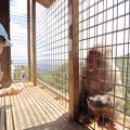 写真: 嵐山モンキーパーク04