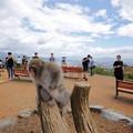 写真: 嵐山モンキーパーク03