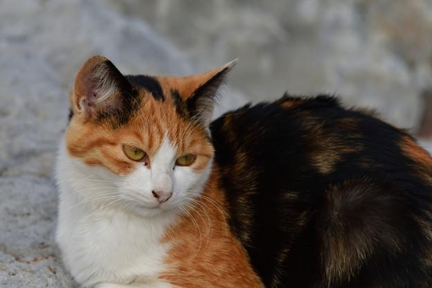 猫三昧_1993