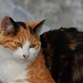 写真: 猫三昧_1993